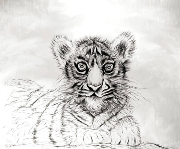 White Tiger Drawing - White Tiger Cub by Abstract Angel Artist Stephen K