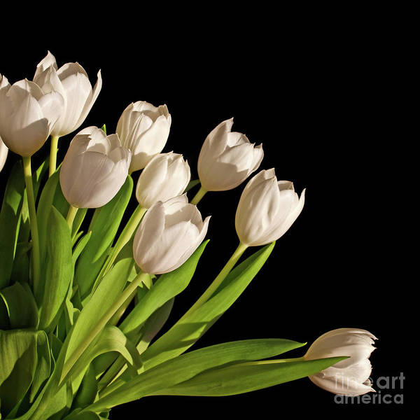 Wall Art - Photograph - White Tulips by Delphimages Photo Creations