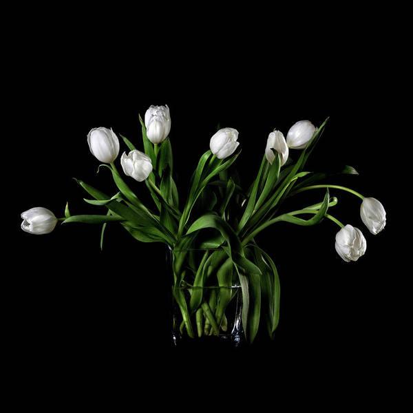 Wall Art - Photograph - White Tulips In Vase by Rachel Slepekis