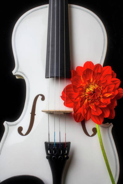 Wall Art - Photograph - White Violin And Red Dahlia by Garry Gay