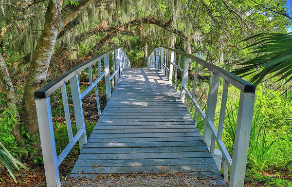 Photograph - White Walking Bridge In Magnolia by Dan Sproul