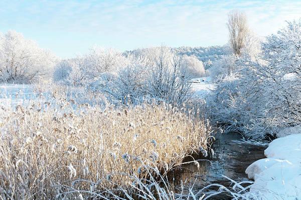 Hardwood Photograph - White Winter Landscape by Martin Wahlborg