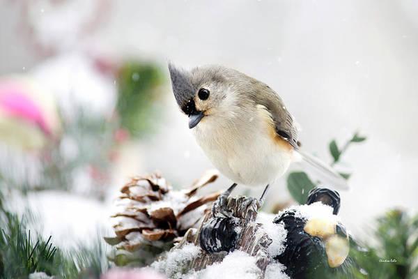 Photograph - White Winter Titmouse Bird by Christina Rollo