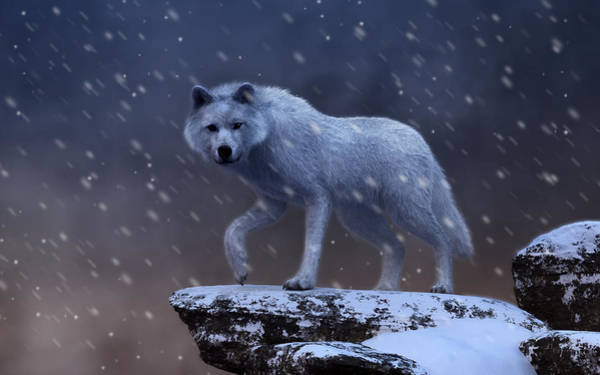 Susi Wall Art - Digital Art - White Wolf In A Blizzard by Daniel Eskridge