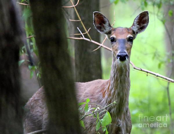 Wall Art - Photograph - Whitetail Deer 412 by Steve Gass