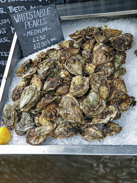 Photograph - Whitstable Oysters by Tony Murtagh