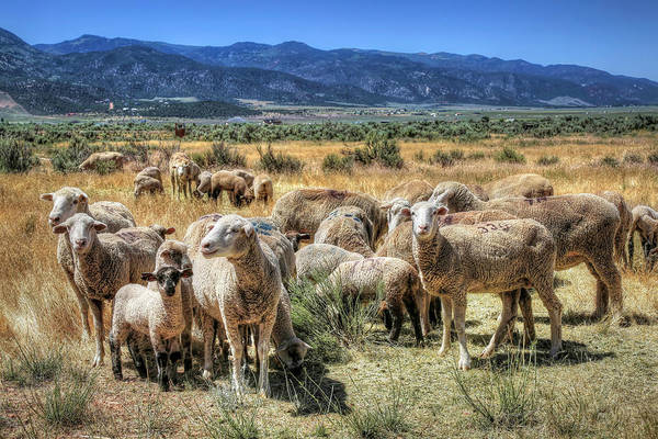 Photograph - Who Are Ewe by Donna Kennedy
