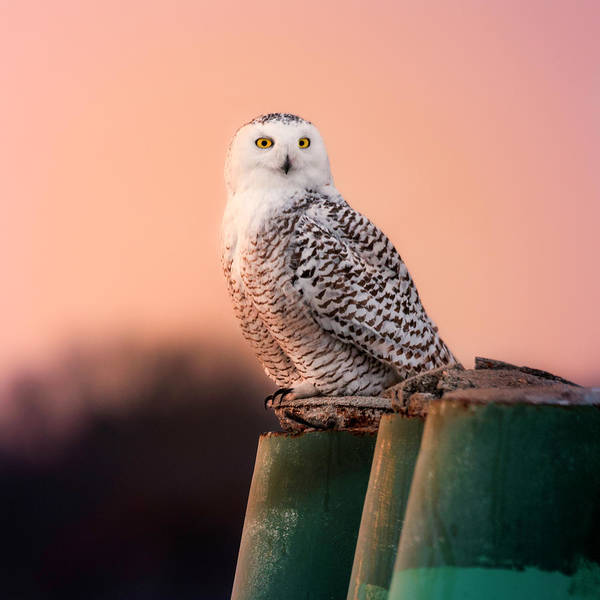 Photograph - Who Are You Looking At? by Thomas Gaitley