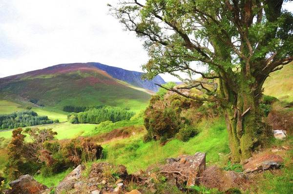 Photograph - Wicklow Journey. Peaceful Mind by Jenny Rainbow