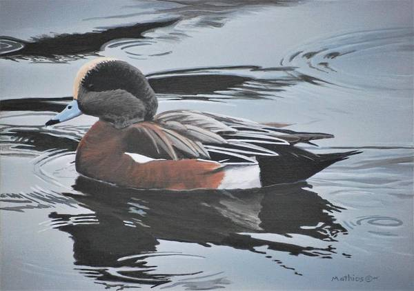 Painting - Wigeon Drake by Peter Mathios