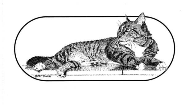 Tabby Drawing - Wilbur by Bill Tomsa