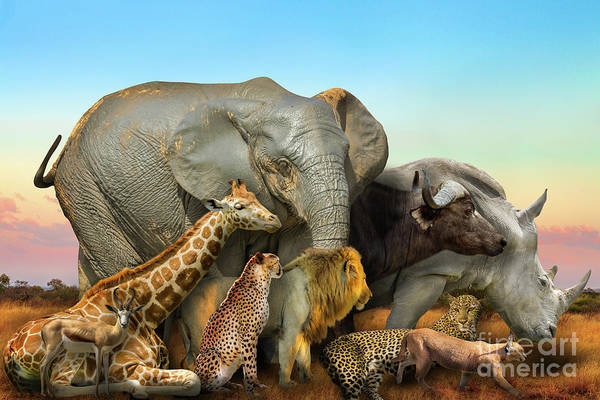 Photograph - Wild African Animals Composition by Benny Marty