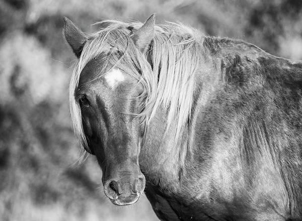 Crazy Horse Photograph - Wild Beach Horse by Stephanie McDowell