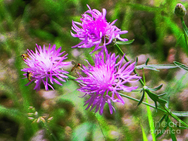 Photograph - Wild Bergamot Bee Balm by Rockin Docks