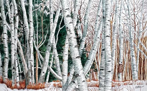 Painting - Wild Birch Trees In The Deep Forest In Watercolor by Christopher Shellhammer