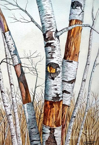 Painting - Wild Birch Trees In The Forest 2nd Half In Watercolor by Christopher Shellhammer