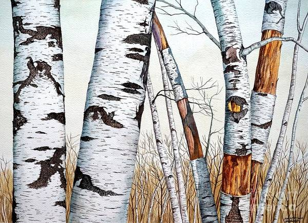 Painting - Wild Birch Trees In The Forest In Watercolor by Christopher Shellhammer