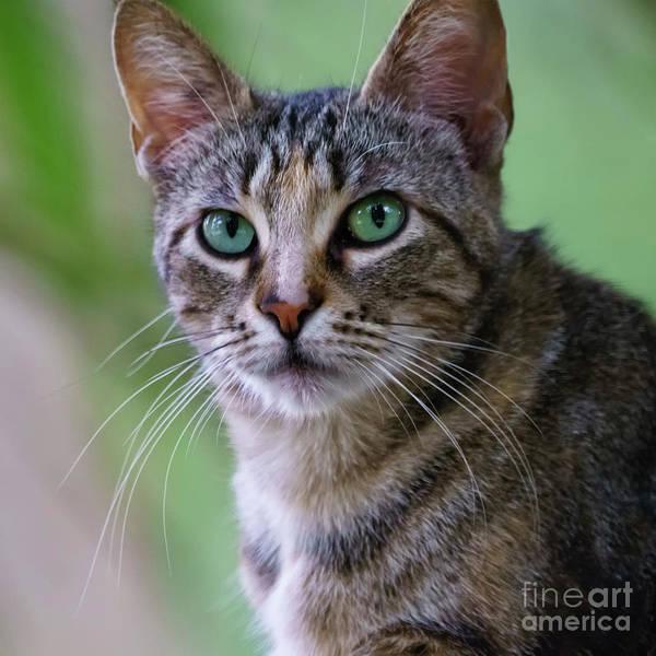 Photograph - Wild Cat Portrait Head On by Pablo Avanzini