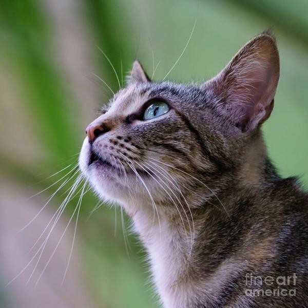 Photograph - Wild Cat Portrait Profile by Pablo Avanzini