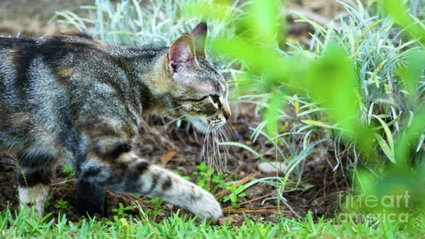 Photograph - Wild Cat Walking On The Grass by Pablo Avanzini