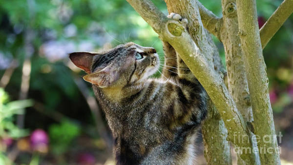 Photograph - Wild Cat With Paws On A Tree by Pablo Avanzini
