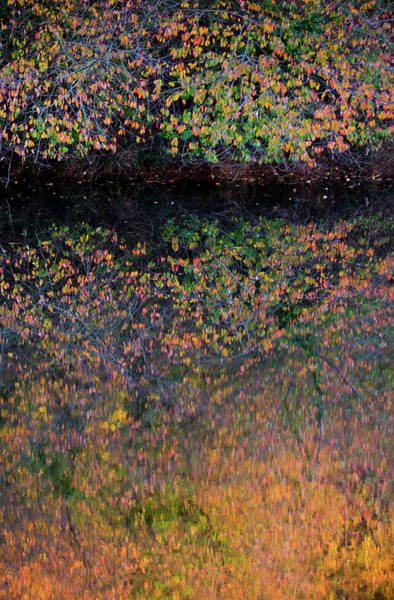 Wall Art - Photograph - Wild Cherry Tree In The Fall, Golden Reflections On The River by Anita Nicholson