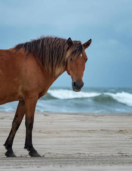Wild Colonial Spanish Mustang Of Carova Stormy Skies Art Print