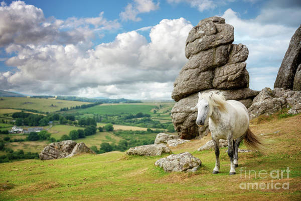 Beautiful Horse Wall Art - Photograph - Wild Dartmoor Pony by Delphimages Photo Creations
