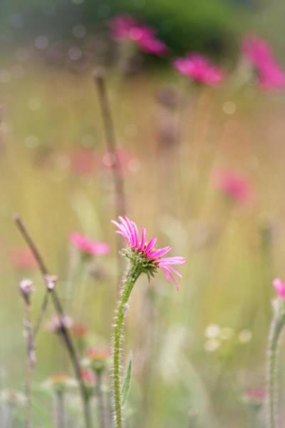 Wall Art - Photograph - Wild Echinacea Tennesseensis Field by Laura Vilandre
