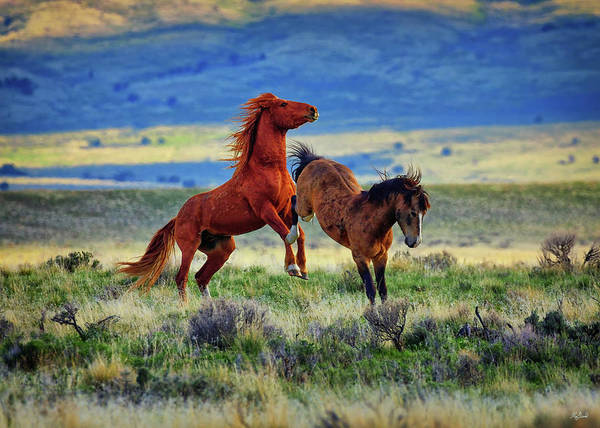 Photograph - Wild Equine Play Time by Greg Norrell