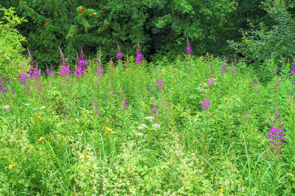 Photograph - Wild Flowers And Shrubs In Vogelsberg by Sun Travels