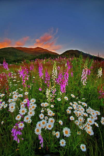 Ketchikan Photograph - Wild Flowers At Sunset 1 by Carlos Rojas