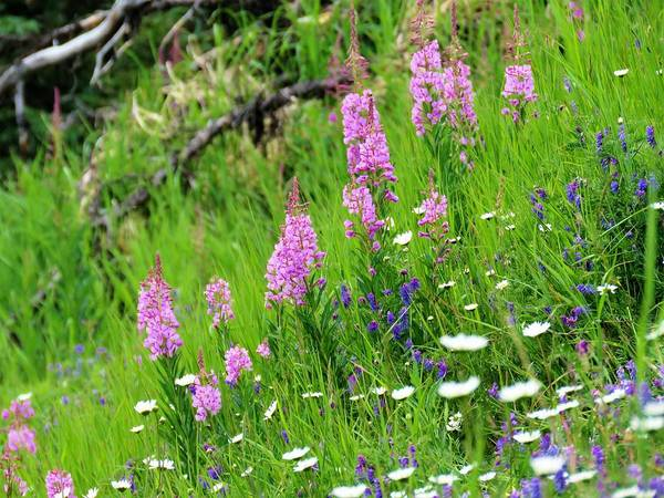 Photograph - Wild Flowers Put On A Show by Joan Stratton