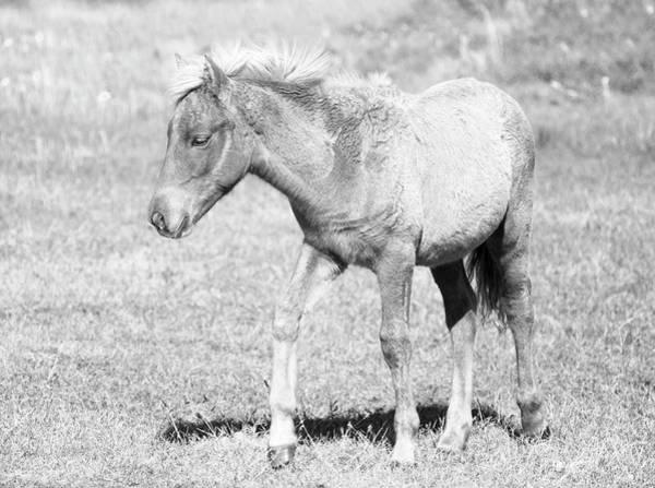 Wall Art - Photograph - Wild Foal On Assateague Island by Stephanie McDowell