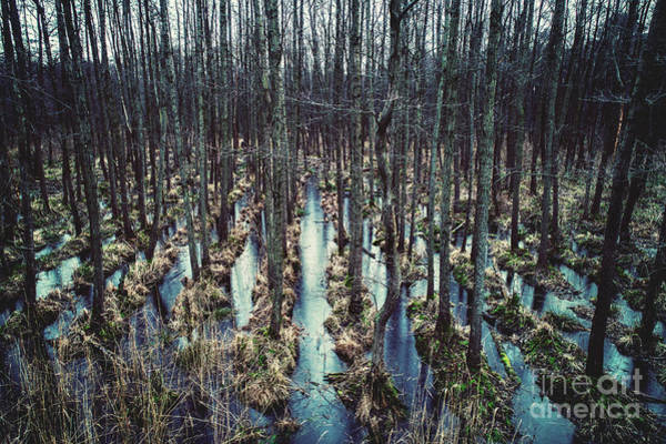 Photograph - Wild Forest On The Water. by Michal Bednarek