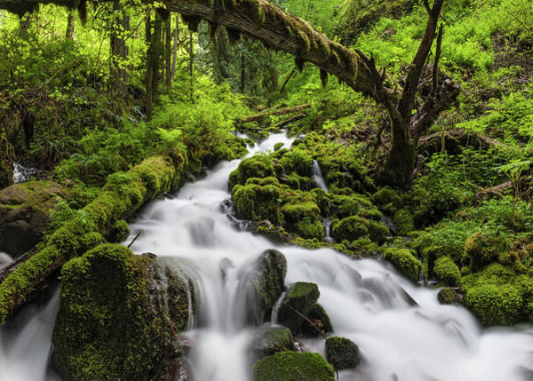 Eagle Photograph - Wild Forest Waterfall Idyllic Green by Fotovoyager