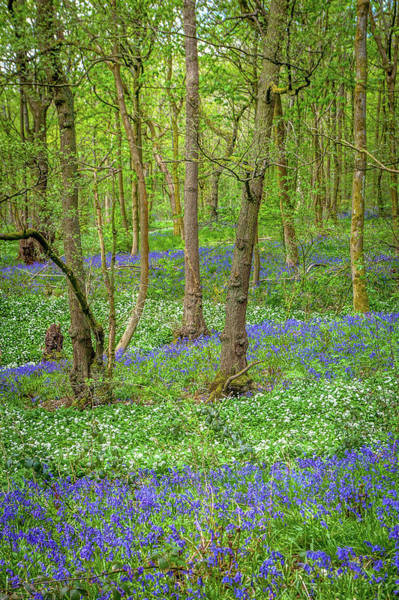 Wall Art - Photograph - Wild Garlic And Bluebells by W Chris Fooshee