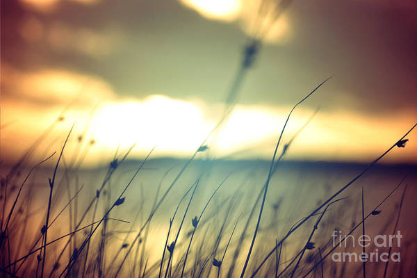 Wall Art - Photograph - Wild Grasses At Golden Summer Sunset by Cienpies Design