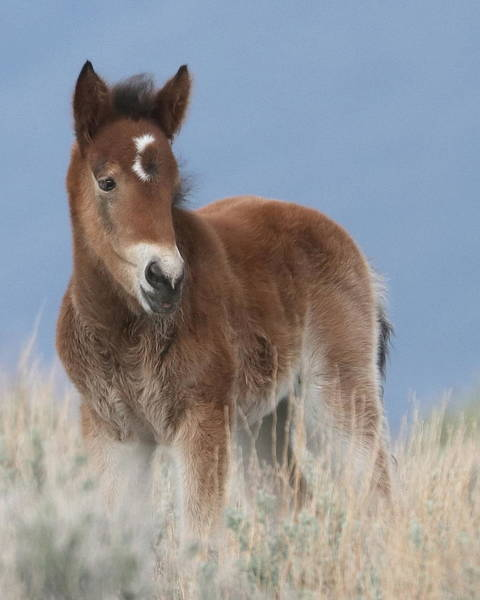 Wall Art - Photograph - Wild Horse Cashly Of Nevada by Cheryl Broumley