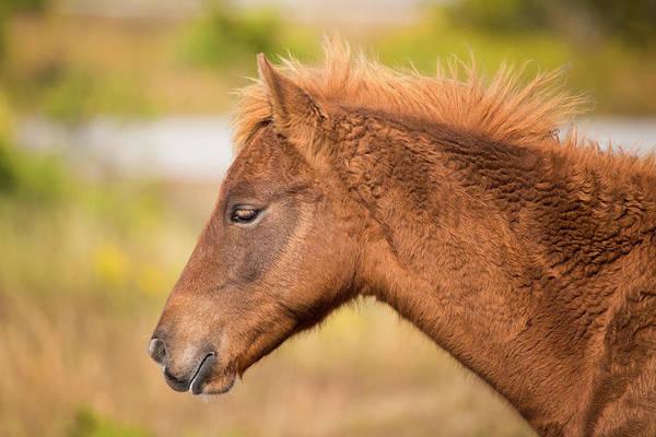 Wall Art - Photograph - Wild Horse Foal by Stephanie McDowell