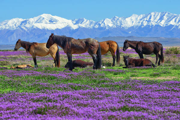 Photograph - Wild Horse Heaven by Greg Norrell