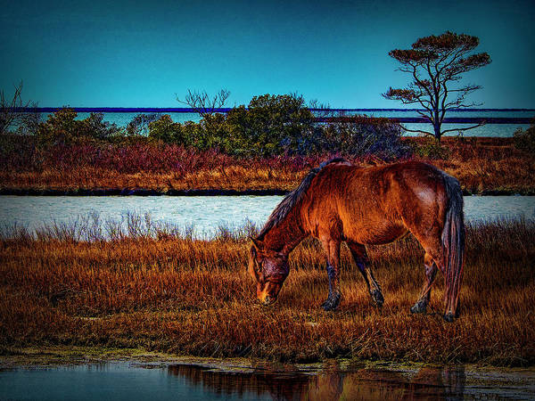 Photograph - Wild Horse II by Paul Wear