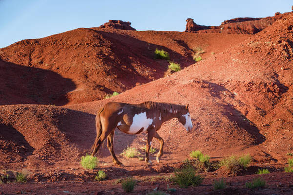 Photograph - Wild Horse In Monument Valley, Arizona by Deimagine