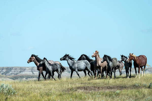 Herd Of Horses Wall Art - Photograph - Wild Horse In Theodore Roosevelt Natl by Mark Newman