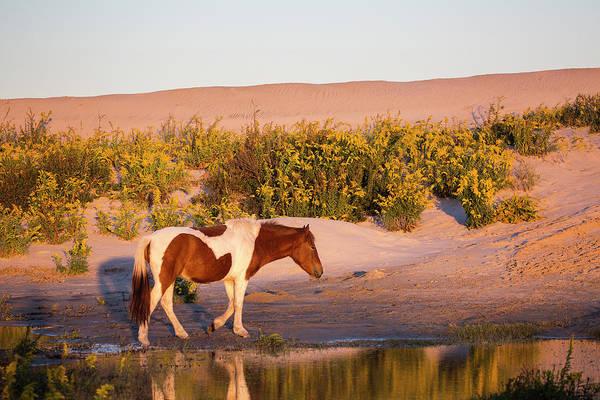 Wall Art - Photograph - Wild Horse On Assateague Island by Stephanie McDowell