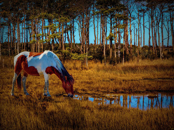 Photograph - Wild Horse by Paul Wear