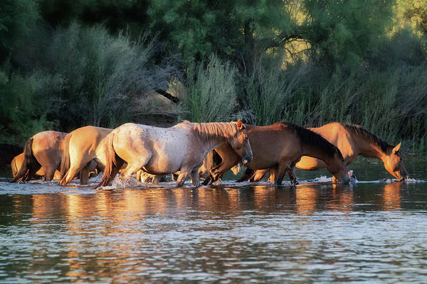 Wall Art - Photograph - Wild Horse River Crossing  by Saija Lehtonen