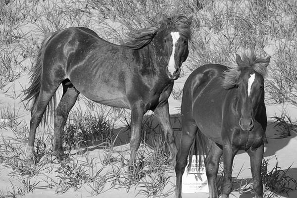 Wall Art - Photograph - Wild Horses 115 by David Stasiak