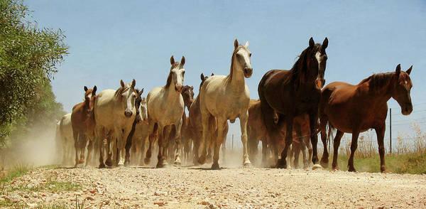 Dust Photograph - Wild Horses by Antonio Arcos Aka Fotonstudio Photography