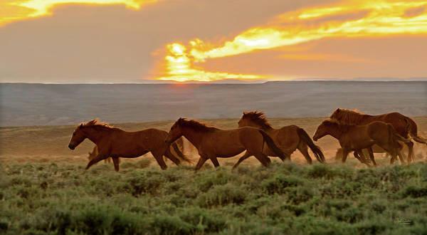 Photograph - Wild Horses At Dusk by Judi Dressler
